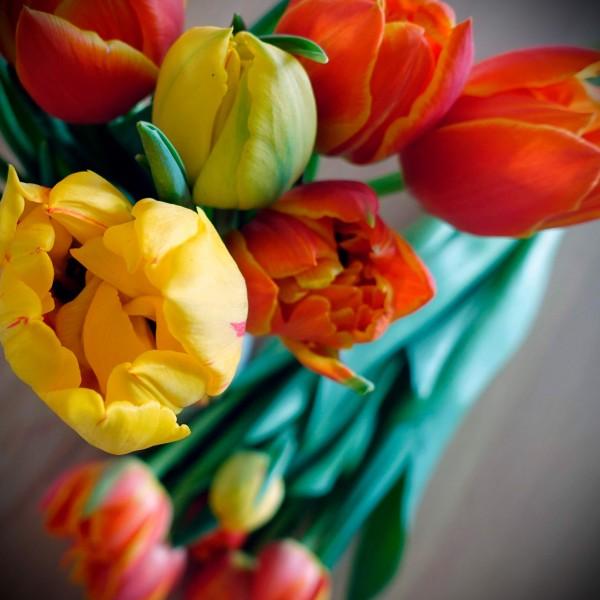 Tulpenstrauß gelb/orange