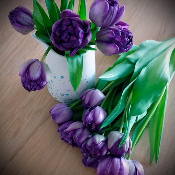 Tulpenstrauß violett