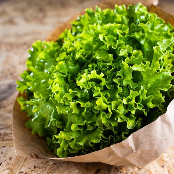 Salatkopf der Saison (Bio)