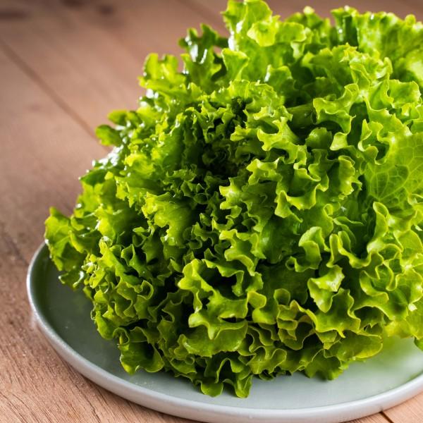 Salatkopf der Saison